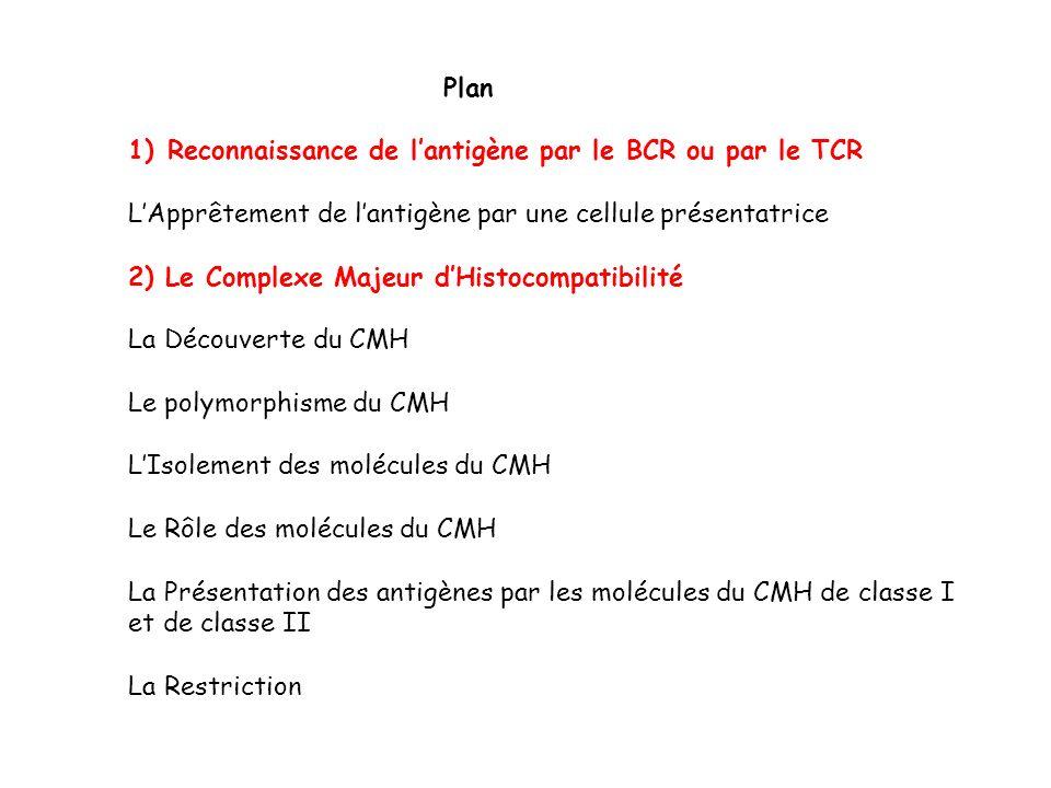 Plan 1)Reconnaissance de lantigène par le BCR ou par le TCR LApprêtement de lantigène par une cellule présentatrice 2) Le Complexe Majeur dHistocompat
