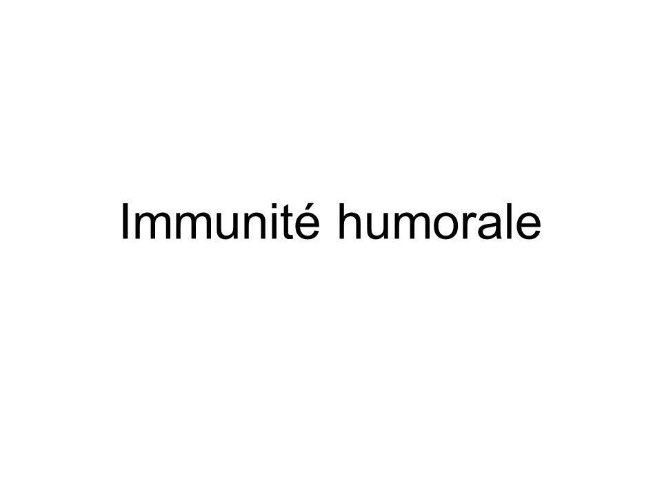 Immunité humorale