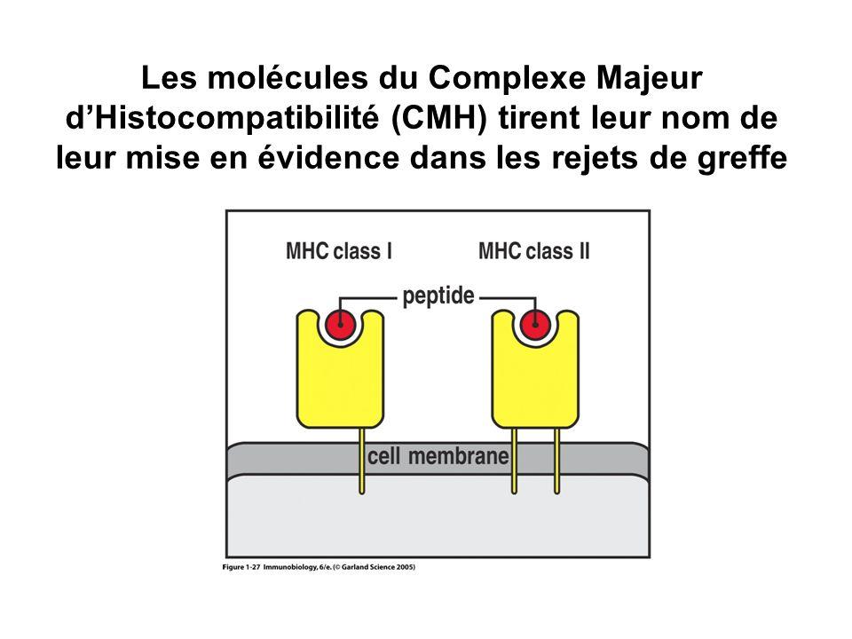 Les molécules du Complexe Majeur dHistocompatibilité (CMH) tirent leur nom de leur mise en évidence dans les rejets de greffe