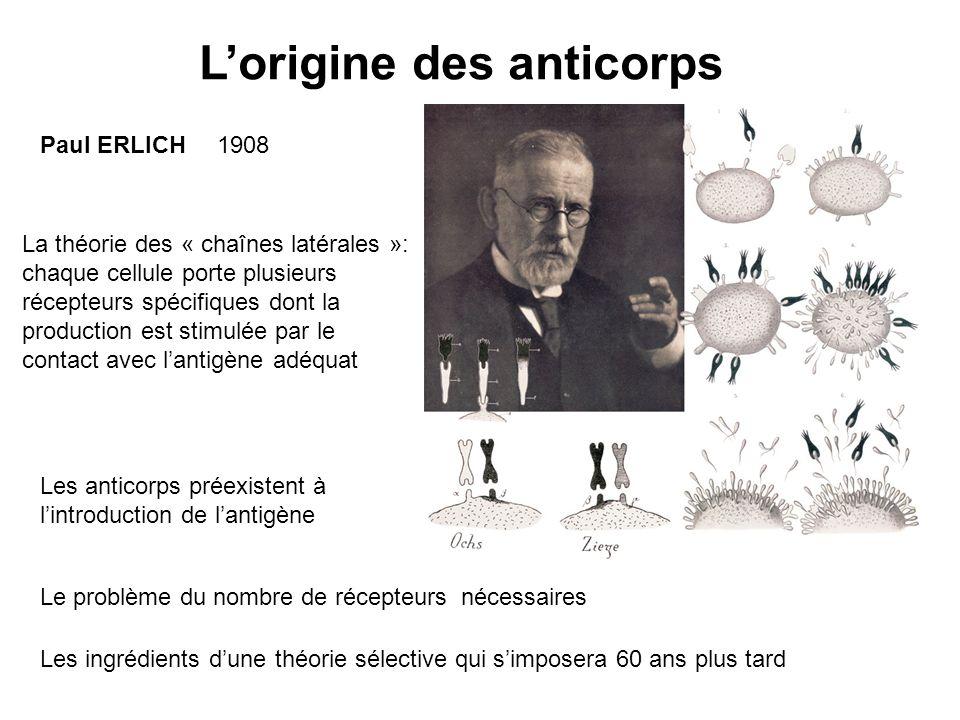 Paul ERLICH La théorie des « chaînes latérales »: chaque cellule porte plusieurs récepteurs spécifiques dont la production est stimulée par le contact