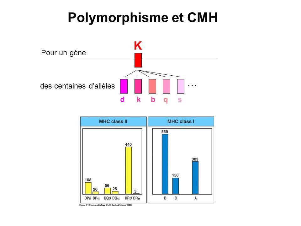 K Pour un gène des centaines dallèles dkbqs … Polymorphisme et CMH