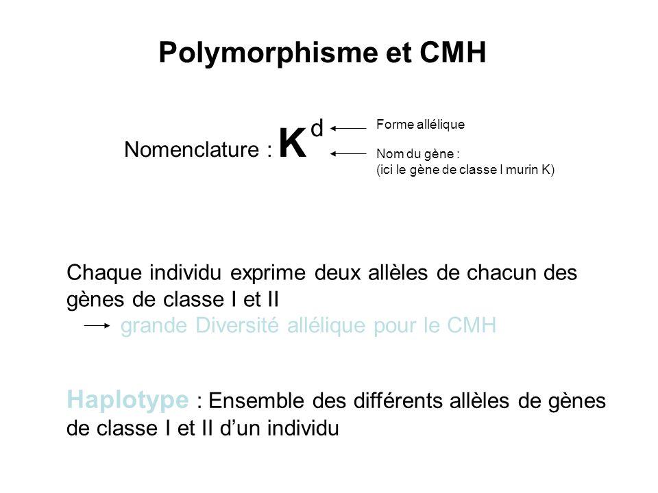 Nomenclature : K d Forme allélique Nom du gène : (ici le gène de classe I murin K) Haplotype : Ensemble des différents allèles de gènes de classe I et