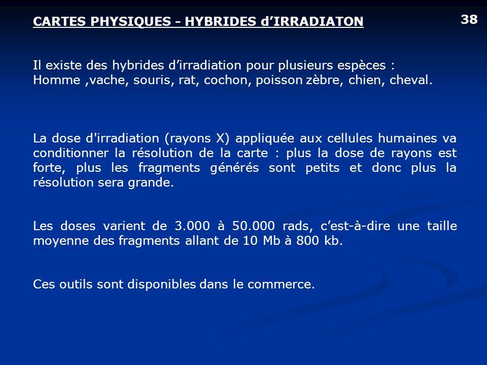 CARTES PHYSIQUES - HYBRIDES dIRRADIATON Il existe des hybrides dirradiation pour plusieurs espèces : Homme,vache, souris, rat, cochon, poisson zèbre,