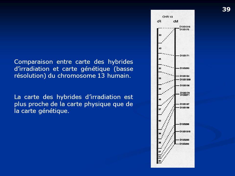 Comparaison entre carte des hybrides dirradiation et carte génétique (basse résolution) du chromosome 13 humain. La carte des hybrides dirradiation es