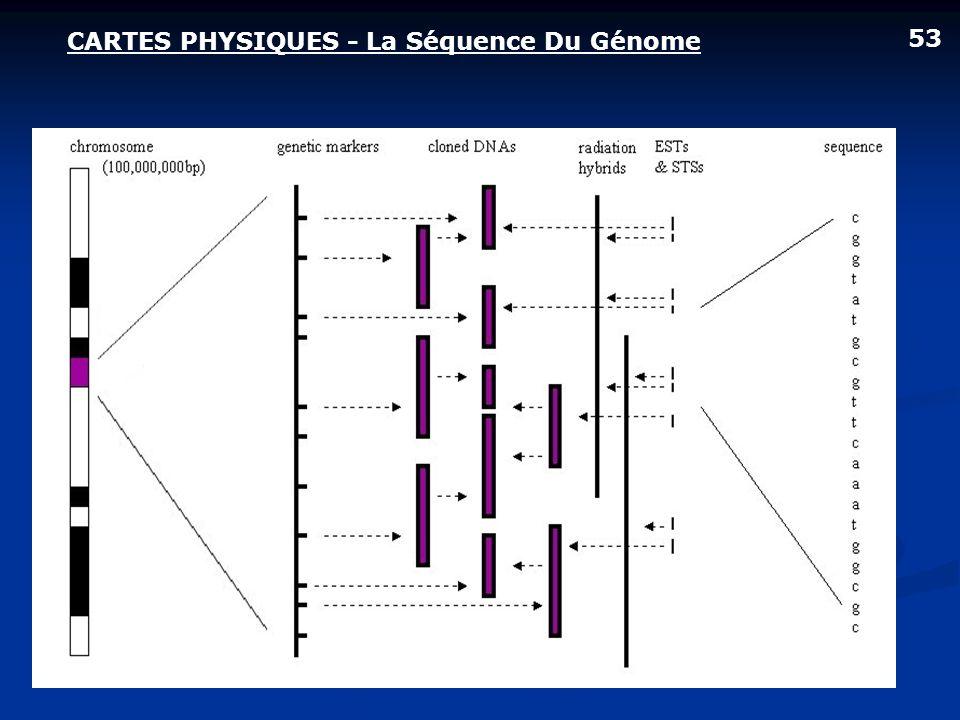 CARTES PHYSIQUES - La Séquence Du Génome 53