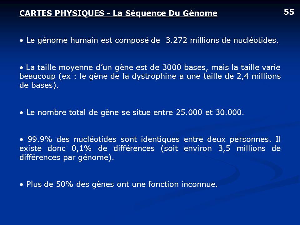 CARTES PHYSIQUES - La Séquence Du Génome Le génome humain est composé de 3.272 millions de nucléotides. La taille moyenne dun gène est de 3000 bases,