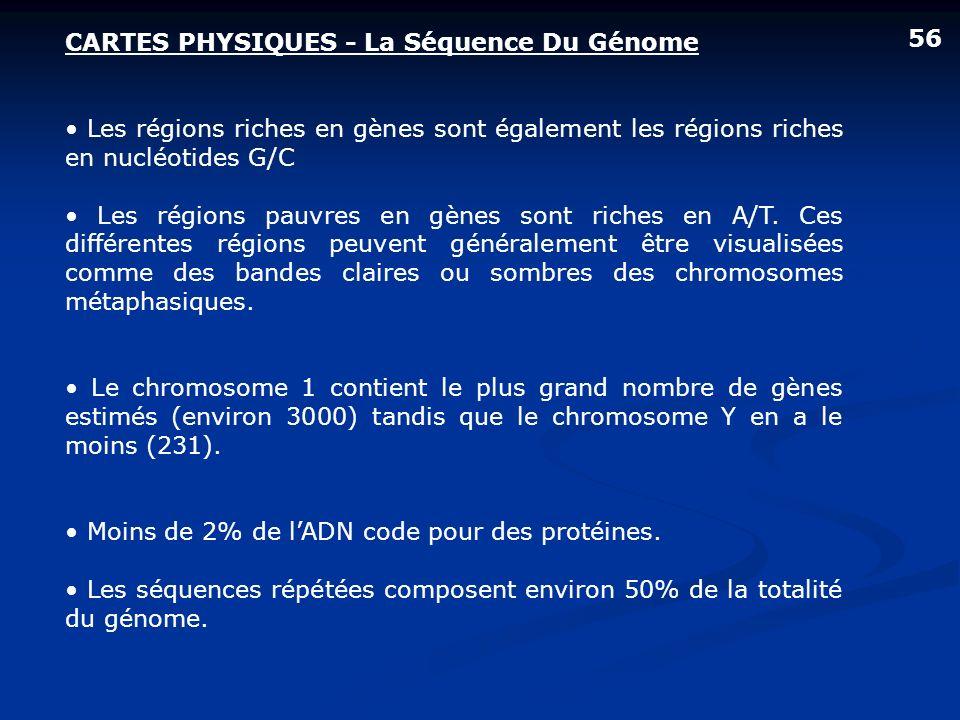CARTES PHYSIQUES - La Séquence Du Génome Les régions riches en gènes sont également les régions riches en nucléotides G/C Les régions pauvres en gènes