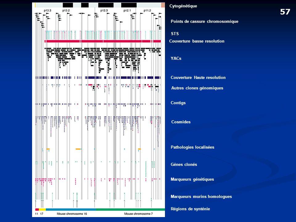 Cytogénétique Points de cassure chromosomique STS Couverture basse resolution YACs Couverture Haute resolution Autres clones génomiques Contigs Cosmid
