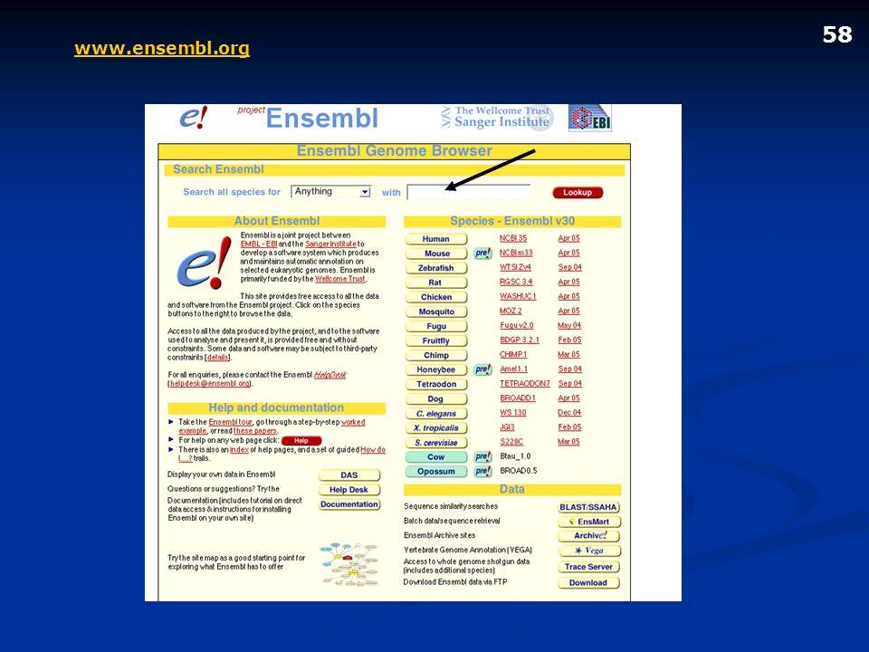 www.ensembl.org 58