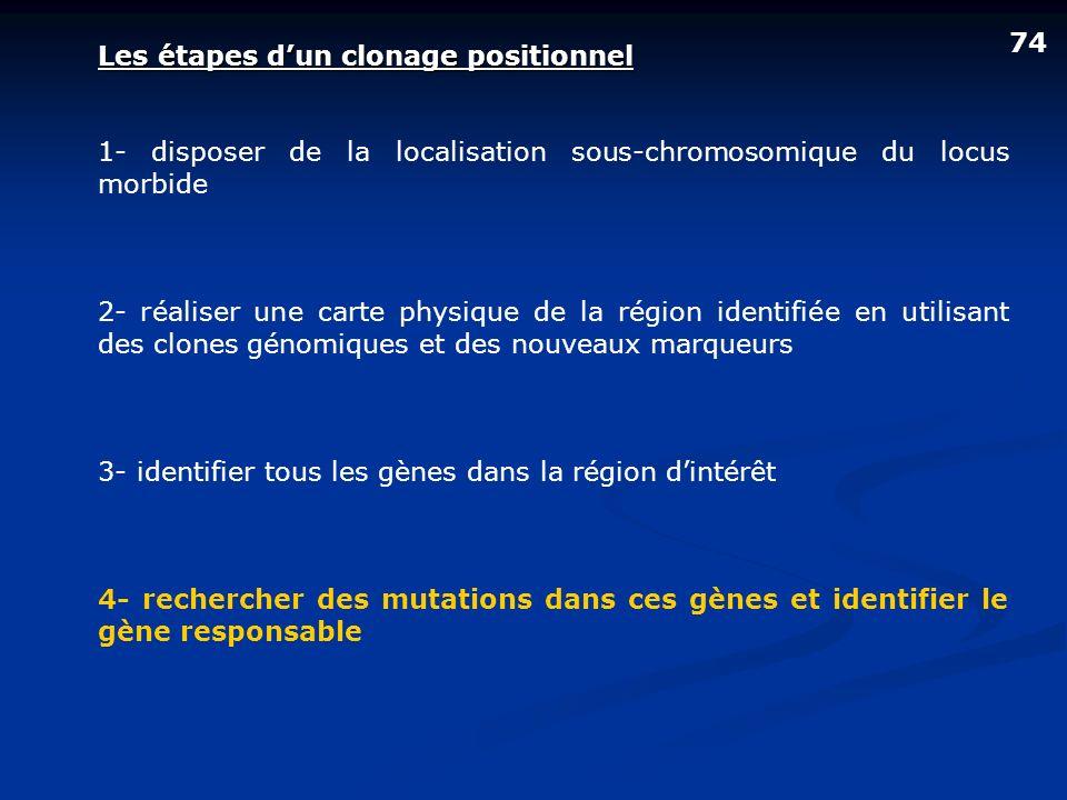 Les étapes dun clonage positionnel 1- disposer de la localisation sous-chromosomique du locus morbide 2- réaliser une carte physique de la région iden