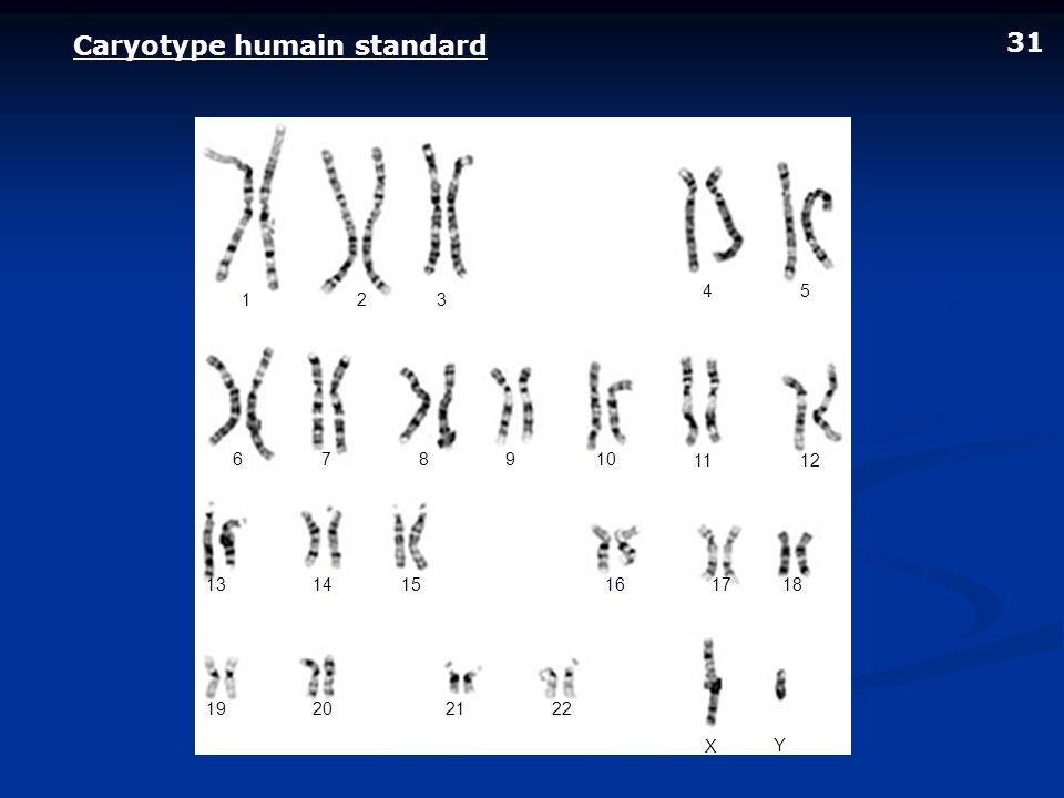 Caryotype humain standard 123 45 678910 1112 131415161718 19202122 X Y 31