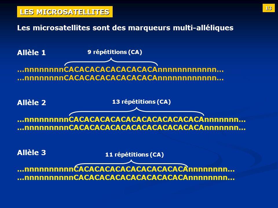 Les microsatellites sont des marqueurs multi-alléliques Allèle 1 …nnnnnnnnCACACACACACACACACAnnnnnnnnnnnn… Allèle 2 …nnnnnnnnnCACACACACACACACACACACACAC