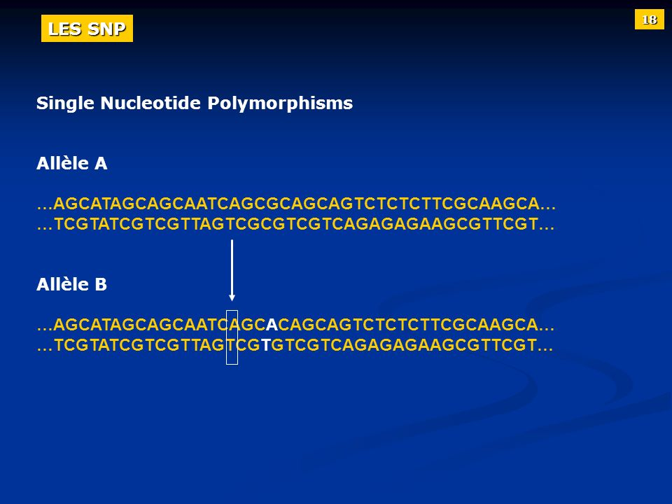 Single Nucleotide Polymorphisms Allèle A …AGCATAGCAGCAATCAGCGCAGCAGTCTCTCTTCGCAAGCA… …TCGTATCGTCGTTAGTCGCGTCGTCAGAGAGAAGCGTTCGT… Allèle B …AGCATAGCAGC