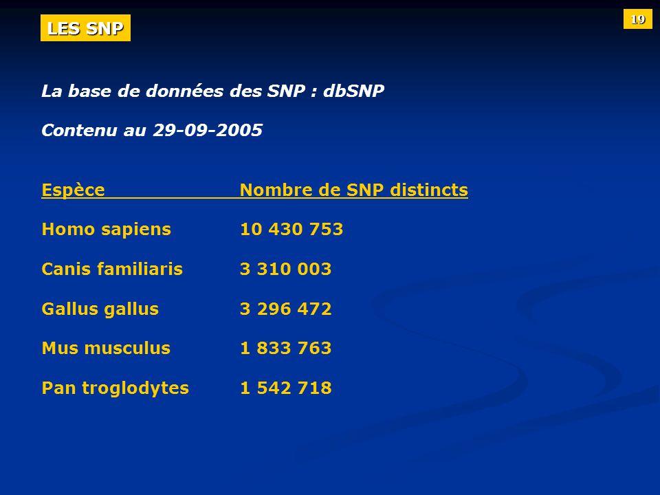 La base de données des SNP : dbSNP Contenu au 29-09-2005 EspèceNombre de SNP distincts Homo sapiens10 430 753 Canis familiaris3 310 003 Gallus gallus3