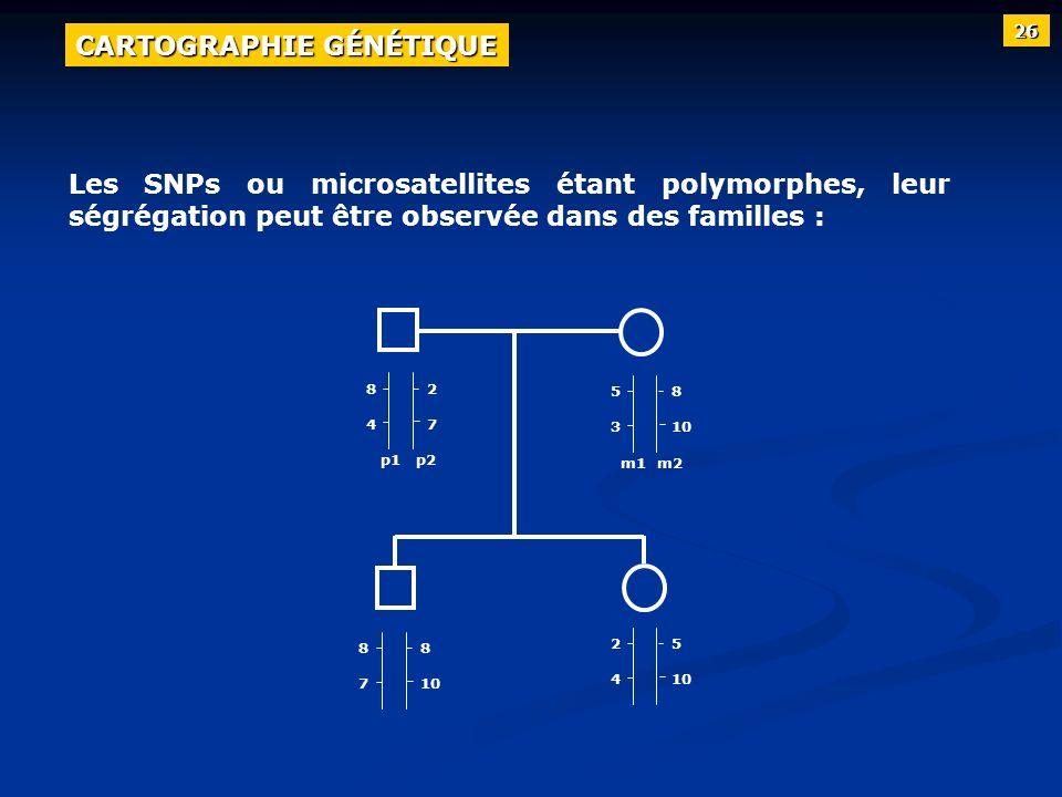 Les SNPs ou microsatellites étant polymorphes, leur ségrégation peut être observée dans des familles : p1 p2 m1 m2 8484 2727 5353 8 10 8787 8 10 2424