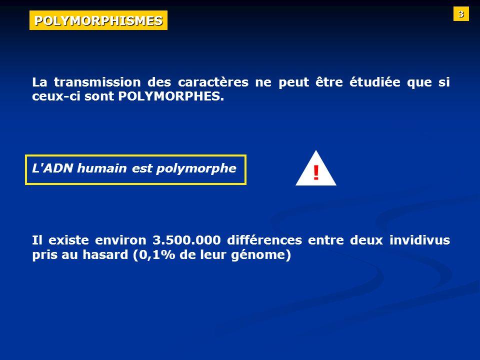 La transmission des caractères ne peut être étudiée que si ceux-ci sont POLYMORPHES. L'ADN humain est polymorphe Il existe environ 3.500.000 différenc