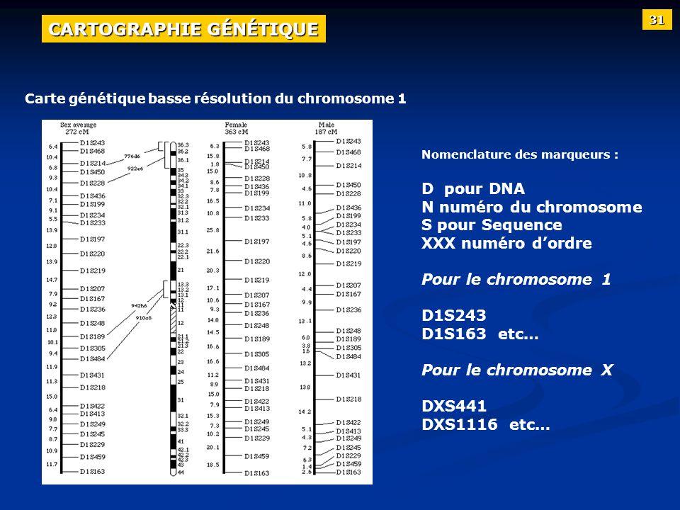 Carte génétique basse résolution du chromosome 1 Nomenclature des marqueurs : D pour DNA N numéro du chromosome S pour Sequence XXX numéro dordre Pour