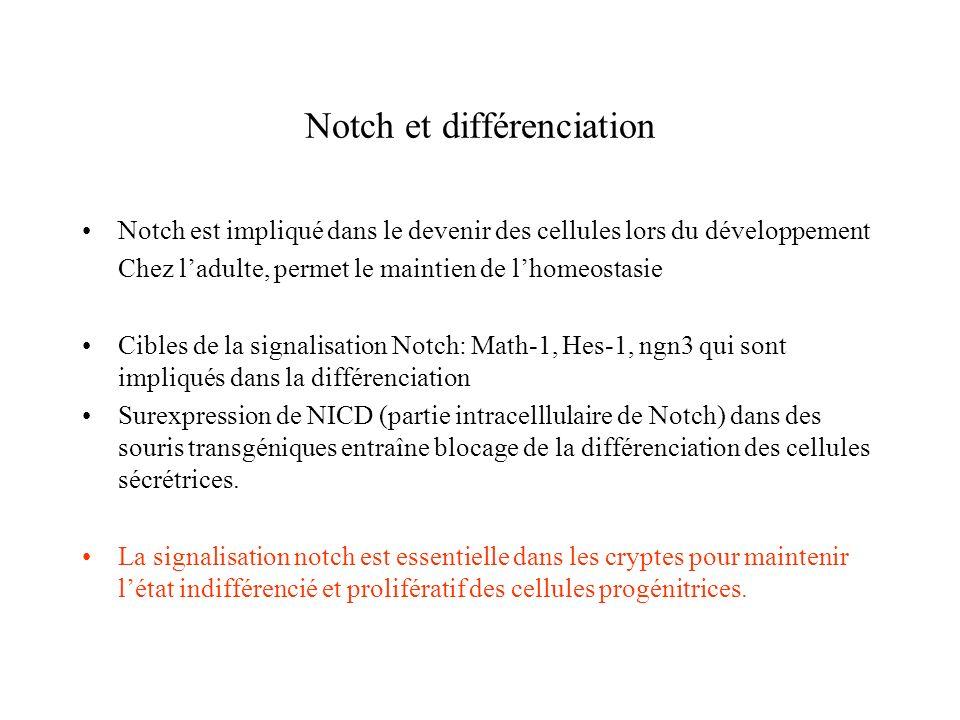 conclusions Cellules difficilement détectables dans les souris normales Augmentation de lexpression dans les souris hes1 KO Développement précoce de cellules de paneth dans les souris KO Hes1 a un effet inhibiteur sur la différenciation des cellules de Paneth Présence des cellules de Paneth dans les villosités: Hes1 jouerait un rôle dans la distribution des cellules (tri)