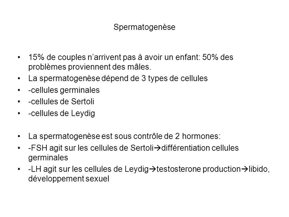 comment avoir plus de spermatozoide