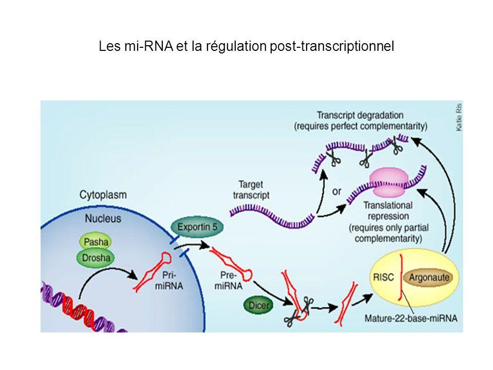 miR-469 et la régulation de la traduction des ARNm de la Protamine et les Transition Proteins Les souris KO pour GRTH (Gonadotropin-regulated testicular RNA helicase) sont stériles: absence de la production de plusieurs protéines essentielles pour la spermatogenèse Les souris KO pour GRTH ont une expression plus élevée du miR- 469 Les séquences reconnues par miR-469 sont présentes dans la partie codante des ARNm de Protamine et Transition Proteins Modèle: miR-469 sexprime et se fixe sur les ARNm pour empêcher leur traduction.