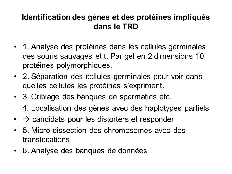 Identification du gène responder Un gène qui est candidat pour le responder doit: -se trouve dans la bonne région génomique -sexprime dans les cellules germinales -être polymorphique ( niveau séquence ou expression) entre les souris t et les souris + -agir comme un responder chez des souris transgèniques