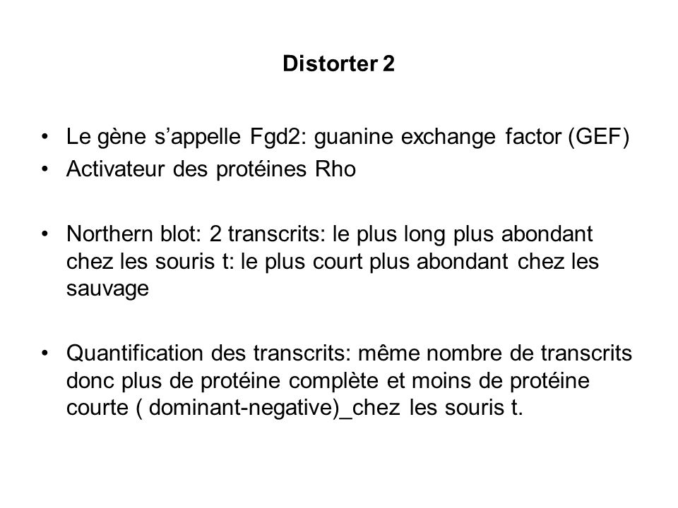 Distorter 2 Le gène sappelle Fgd2: guanine exchange factor (GEF) Activateur des protéines Rho Northern blot: 2 transcrits: le plus long plus abondant