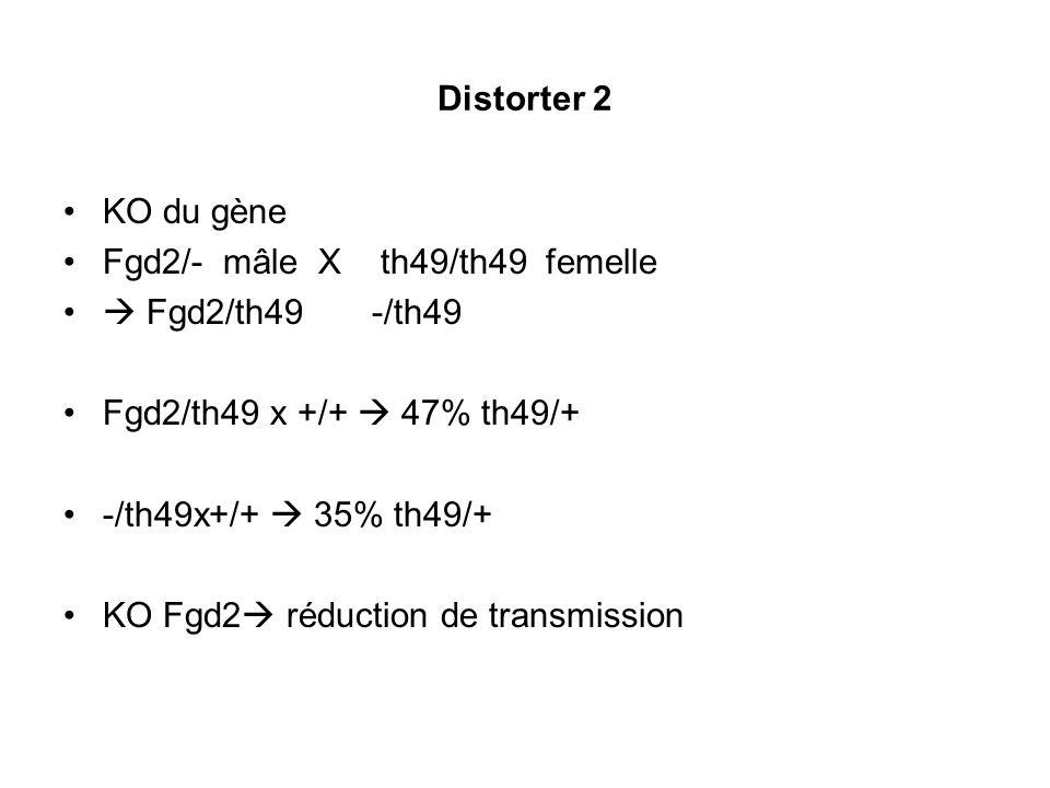 Hermann Bauer et al. Genes Dev. 2007; 21: 143-147 Le rôle des distorters