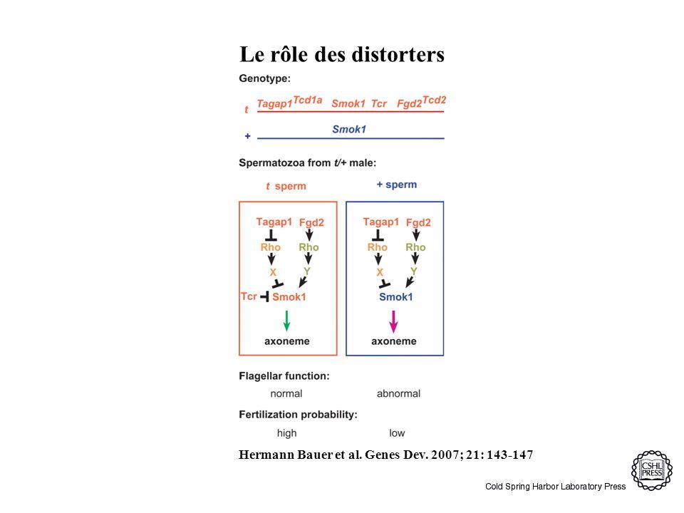 Socio-biologie du complexe-t 1.2 grandes inversions très peu de recombinaison 2.
