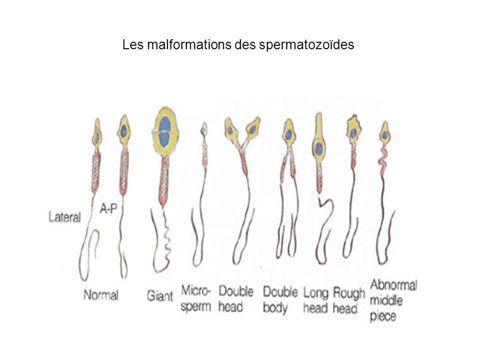 Les chromosomes X et Y pendant la spermatogenèse Crossing-over obligatoire pour les paires dautosomes pendant la méiose: un check-point Pareil pour les chromosomes X et Y: région pseudoautosomal sur les 2 chromosomes: souris X0 sont stériles La transcription des gènes sur le chromosome X arrête pendant la méiose, la transcription des autosomes continue Peu de gènes sur le chromosome Y; sur le chromosome X beaucoup de gènes qui sexpriment au début de la spermatogenèse.