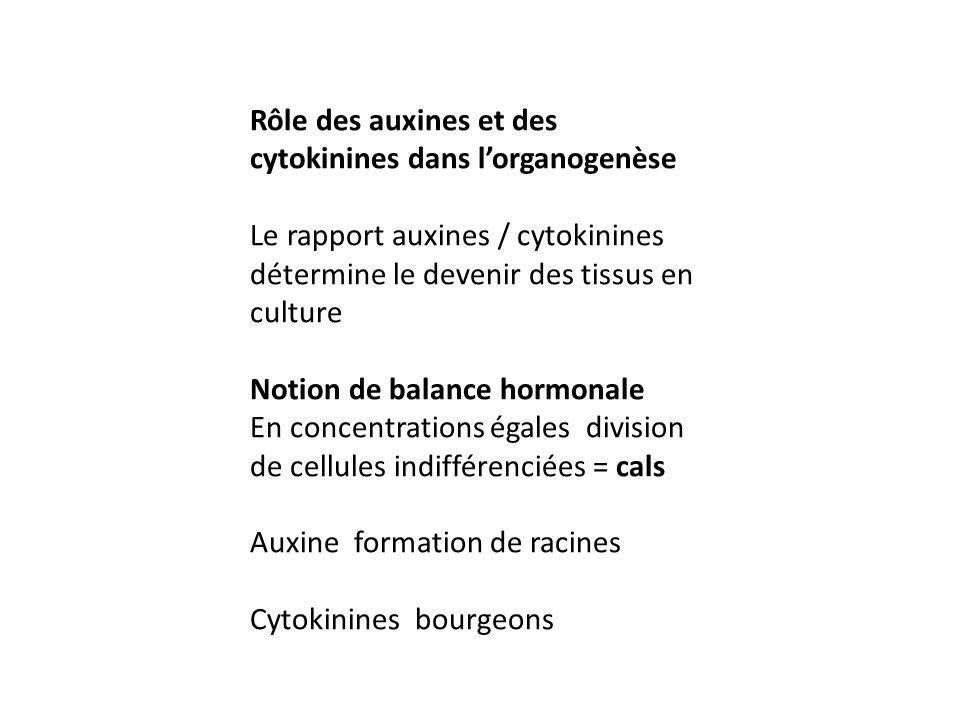 Rôle des auxines et des cytokinines dans lorganogenèse Le rapport auxines / cytokinines détermine le devenir des tissus en culture Notion de balance h