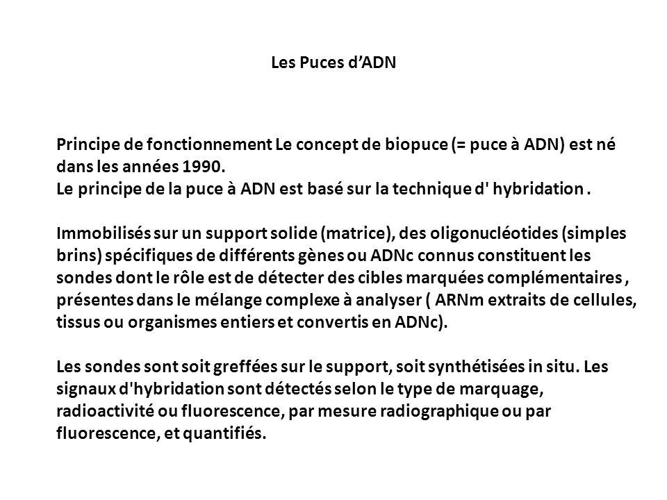 Principe de fonctionnement Le concept de biopuce (= puce à ADN) est né dans les années 1990. Le principe de la puce à ADN est basé sur la technique d'