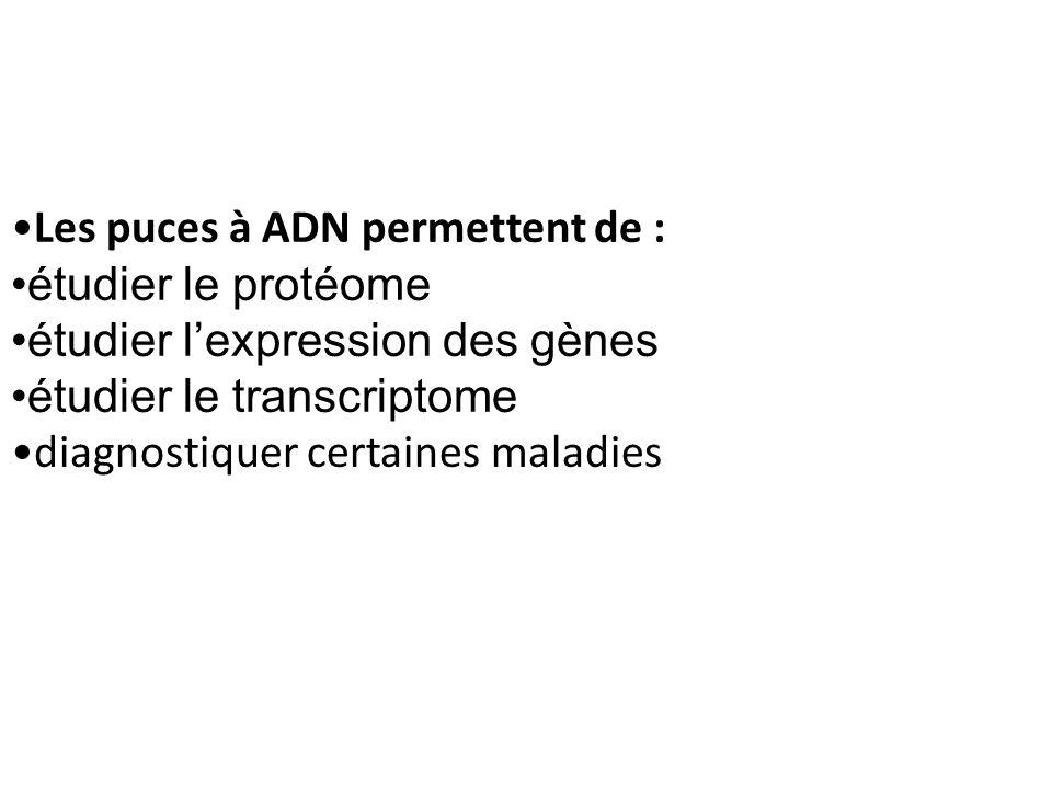 Les puces à ADN permettent de : étudier le protéome étudier lexpression des gènes étudier le transcriptome diagnostiquer certaines maladies