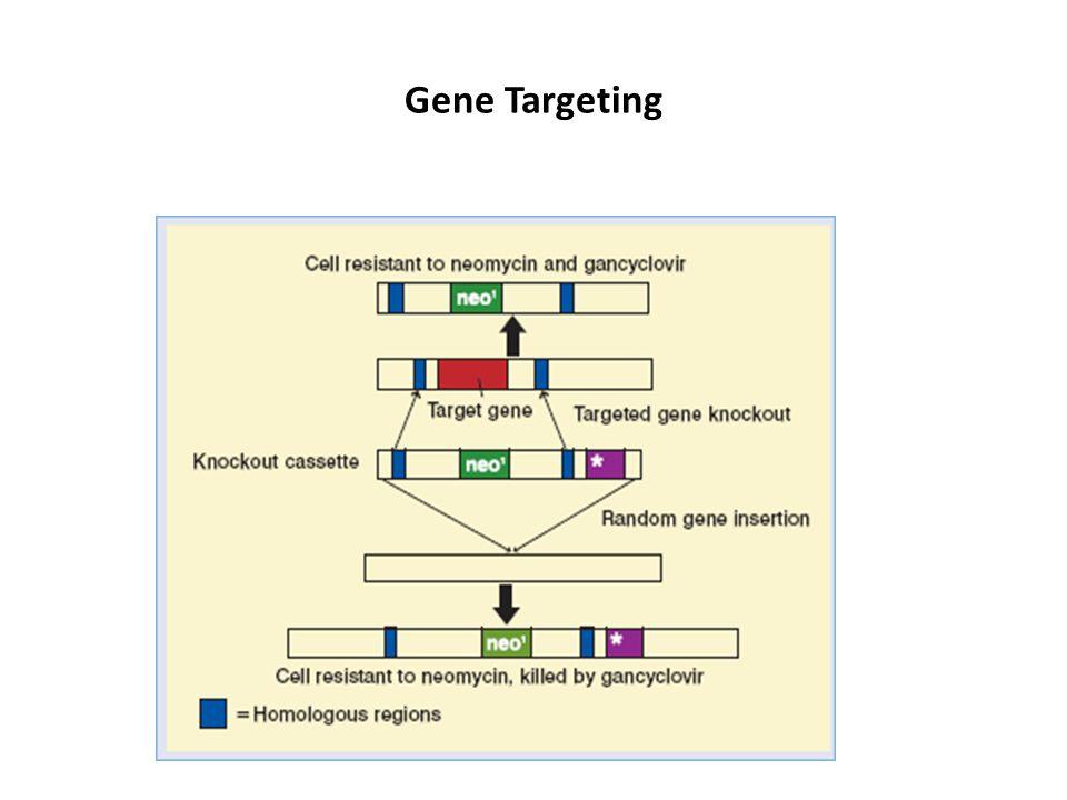 Exemples des souris knockout 1. Le gène Sry 2. Le gène p53 3. Le gène Myo D et la redondance