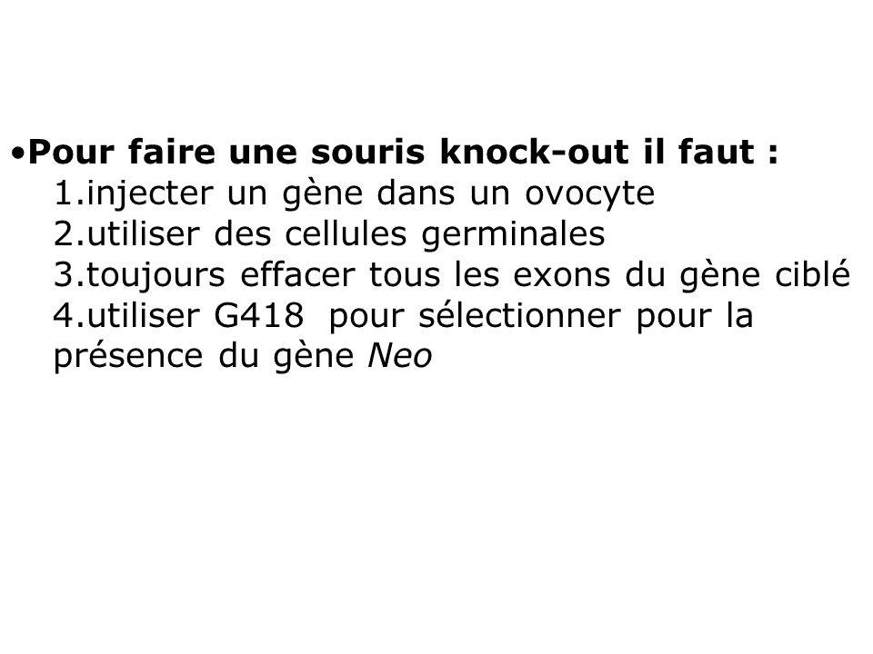 Pour faire une souris knock-out il faut : 1.injecter un gène dans un ovocyte 2.utiliser des cellules germinales 3.toujours effacer tous les exons du g
