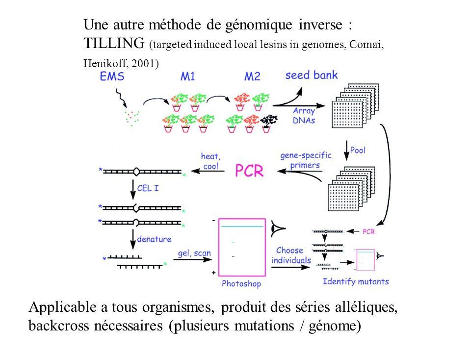 Une autre méthode de génomique inverse : TILLING (targeted induced local lesins in genomes, Comai, Henikoff, 2001) Applicable a tous organismes, produ