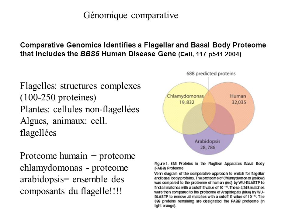 Comparative Genomics Identifies a Flagellar and Basal Body Proteome that Includes the BBS5 Human Disease Gene (Cell, 117 p541 2004) Flagelles: structu