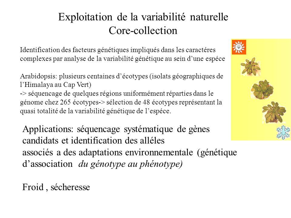 Exploitation de la variabilité naturelle Core-collection Identification des facteurs génétiques impliqués dans les caractéres complexes par analyse de
