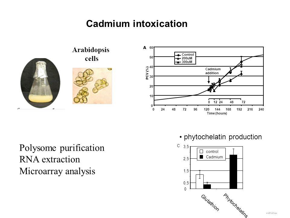 Cadmium intoxication 264 0 12 24 48 72 0 10 20 30 40 50 60 024487296120144168192216240 Time (hours) PCV (%) Control 200uM 300uM Cadmium addition A Glu