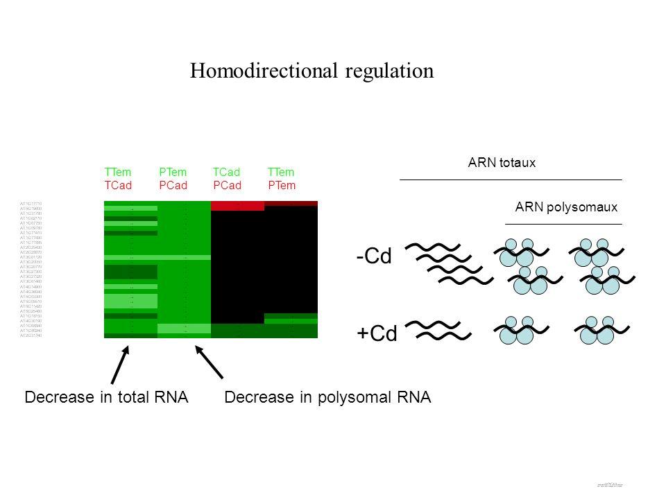 Homodirectional regulation ARN totaux ARN polysomaux -Cd +Cd TTem TCad PTem PCad TCad PCad TTem PTem Decrease in total RNADecrease in polysomal RNA