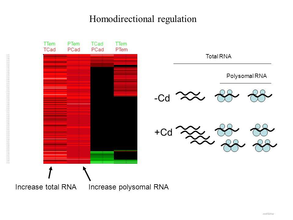 -Cd +Cd Total RNA Polysomal RNA TTem TCad PTem PCad TCad PCad TTem PTem Homodirectional regulation Increase total RNAIncrease polysomal RNA