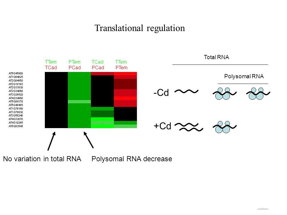 Translational regulation -Cd +Cd Total RNA Polysomal RNA TTem TCad PTem PCad TCad PCad TTem PTem No variation in total RNAPolysomal RNA decrease