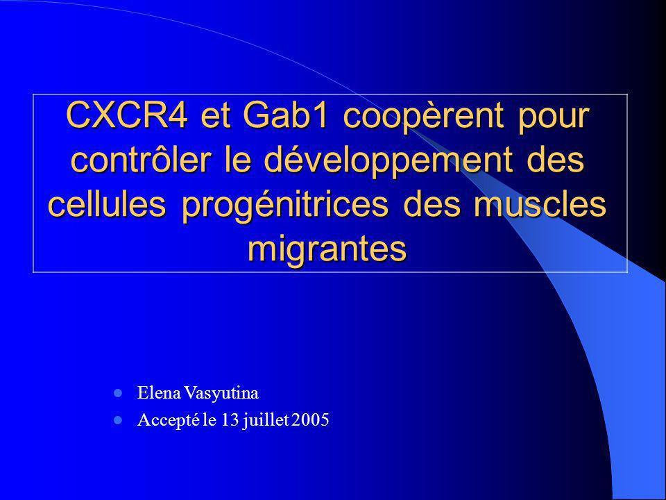 CXCR4 et Gab1 coopèrent pour contrôler le développement des cellules progénitrices des muscles migrantes Elena Vasyutina Accepté le 13 juillet 2005