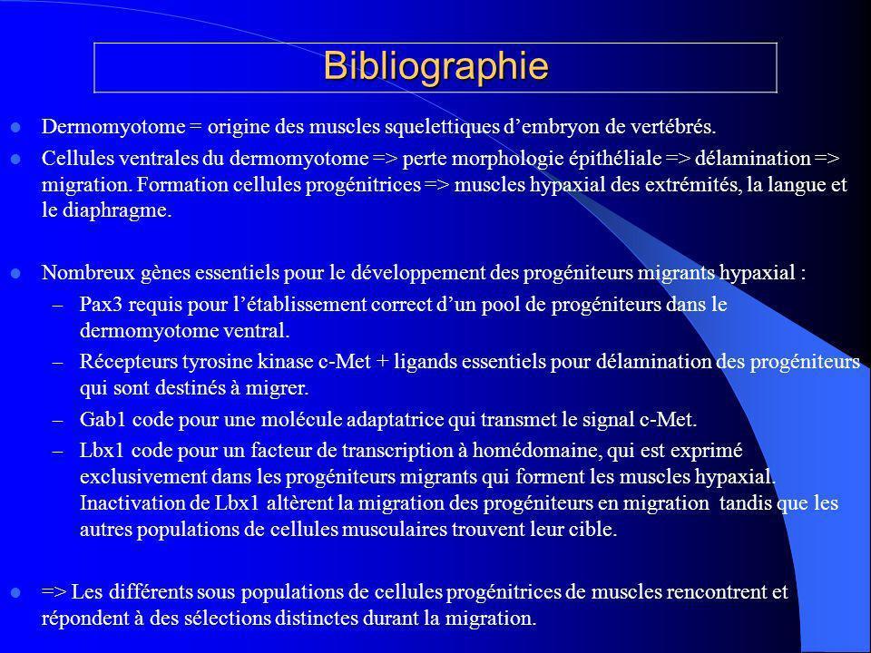 Bibliographie Dermomyotome = origine des muscles squelettiques dembryon de vertébrés.