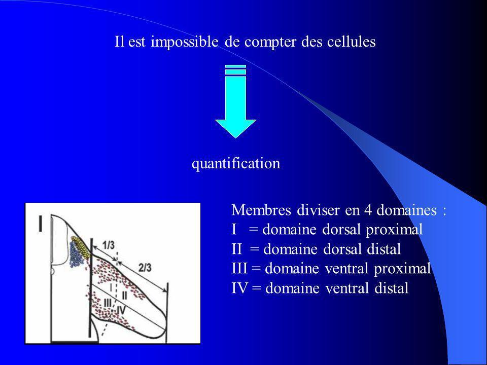 Il est impossible de compter des cellules quantification Membres diviser en 4 domaines : I = domaine dorsal proximal II = domaine dorsal distal III = domaine ventral proximal IV = domaine ventral distal