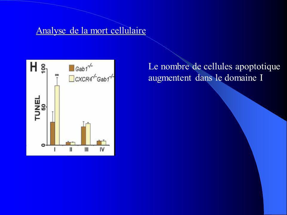 Analyse de la mort cellulaire Le nombre de cellules apoptotique augmentent dans le domaine I