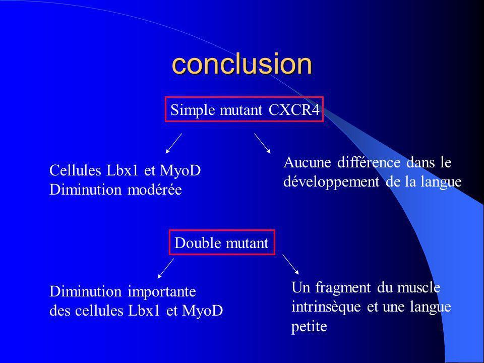 conclusion Simple mutant CXCR4 Cellules Lbx1 et MyoD Diminution modérée Aucune différence dans le développement de la langue Double mutant Diminution importante des cellules Lbx1 et MyoD Un fragment du muscle intrinsèque et une langue petite