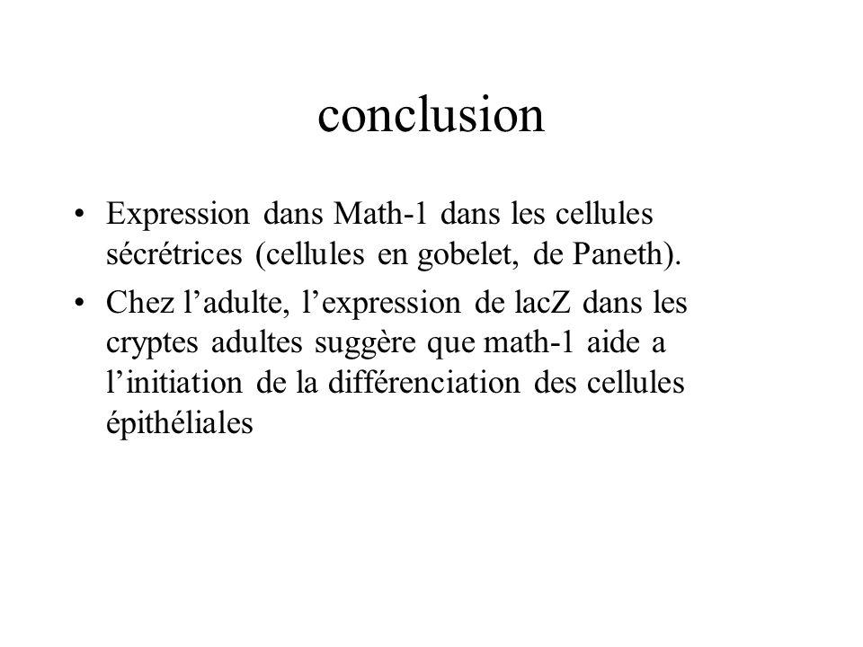 conclusion Expression dans Math-1 dans les cellules sécrétrices (cellules en gobelet, de Paneth). Chez ladulte, lexpression de lacZ dans les cryptes a