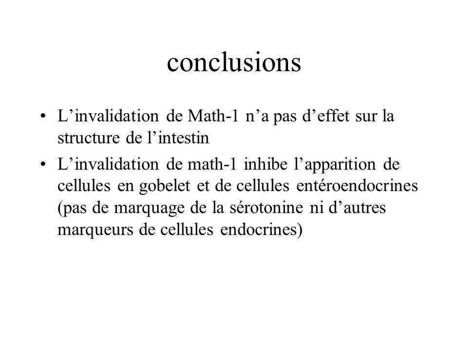 conclusions Linvalidation de Math-1 na pas deffet sur la structure de lintestin Linvalidation de math-1 inhibe lapparition de cellules en gobelet et d