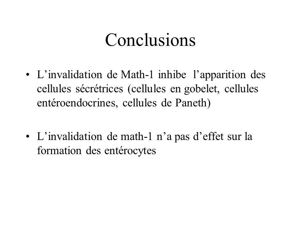 Conclusions Linvalidation de Math-1 inhibe lapparition des cellules sécrétrices (cellules en gobelet, cellules entéroendocrines, cellules de Paneth) L