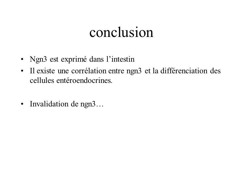 conclusion Ngn3 est exprimé dans lintestin Il existe une corrélation entre ngn3 et la différenciation des cellules entéroendocrines. Invalidation de n